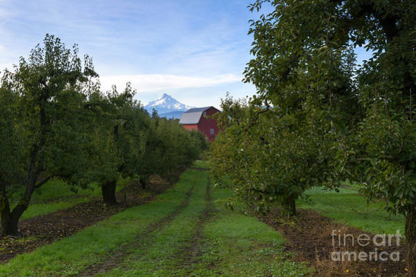Mt Hood Photograph - Red Barn Mountain by Mike Dawson