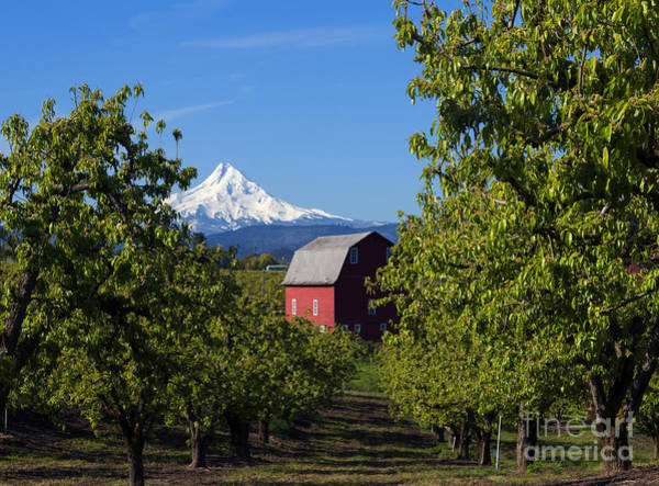 Mt Hood Photograph - Red Barn View by Mike Dawson