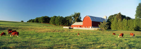 Wall Art - Photograph - Red Barn With Cattle In A Field, Kent by Animal Images