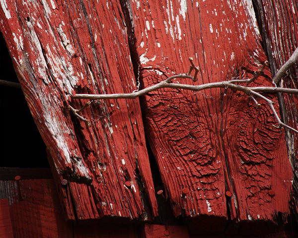 Photograph - Red Barn Wood With Dried Vine by Rebecca Sherman
