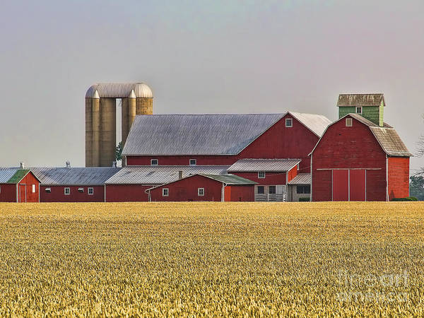 Wall Art - Photograph - Red Barns And Wheat Field by Jack Schultz