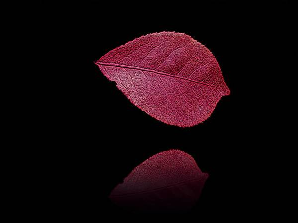 Photograph - Red Beauty by David Dehner