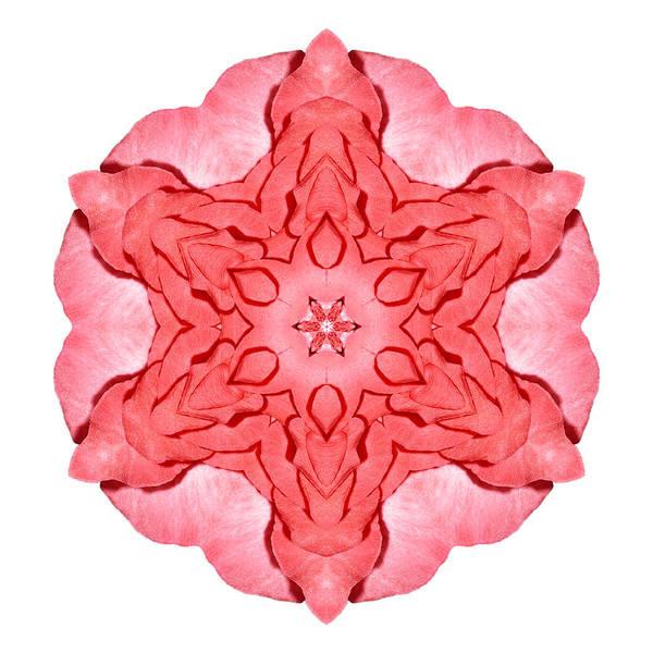 Photograph - Red Begonia II Flower Mandala White by David J Bookbinder