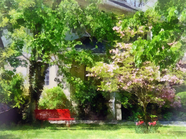 Photograph - Red Bench By Pink Tree by Susan Savad