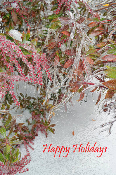 Ice Plant Digital Art - Red Berries Over Snow by Eva Kaufman