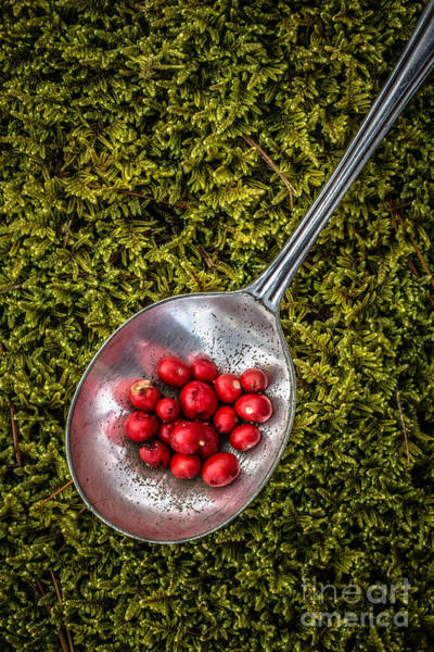 Wall Art - Photograph - Red Berries Silver Spoon Moss by Edward Fielding