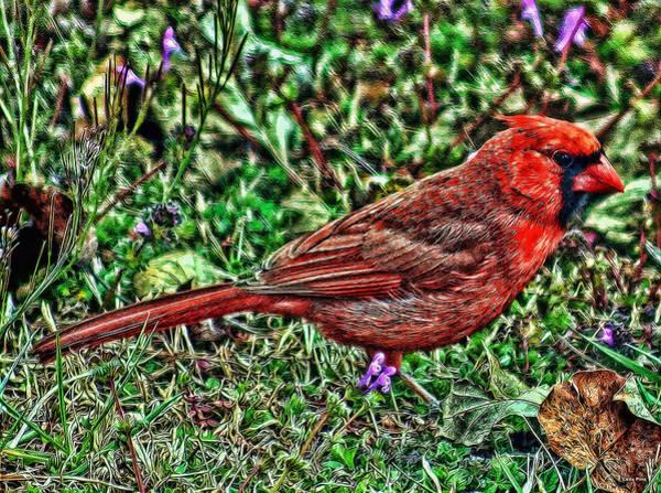 Photograph - Red Bird Art by Lesa Fine