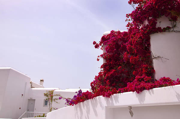 Photograph - Red Bourganvillea On The Island Of Mykonos by Brenda Kean