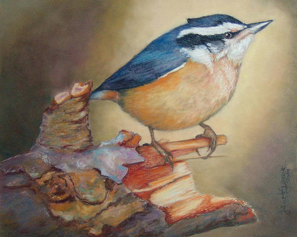 Painting - Red-breasted Nuthatch Bird by Janet Garcia