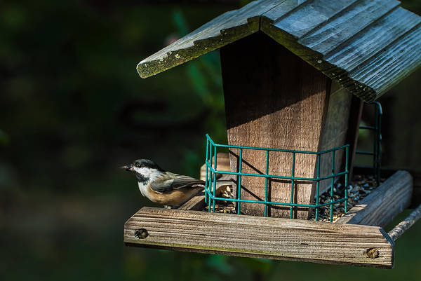 Photograph - Red-breasted Nuthatch by  Onyonet  Photo Studios