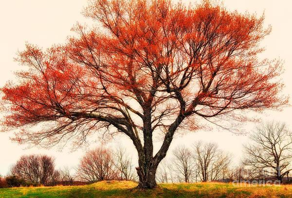 Wall Art - Photograph - Red Bud Tree - Blue Ridge Parkway I by Dan Carmichael