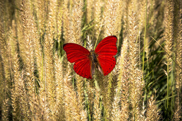 Wall Art - Photograph - Red Butterfly In The Tall Weeds by Garry Gay