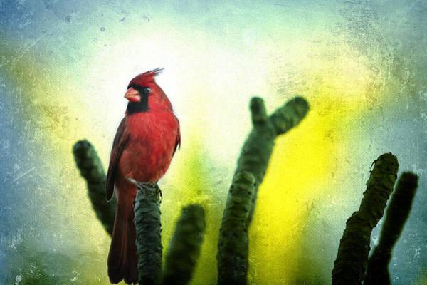 Photograph - Red Cardinal No. 1 - Kauai - Hawaii by Belinda Greb