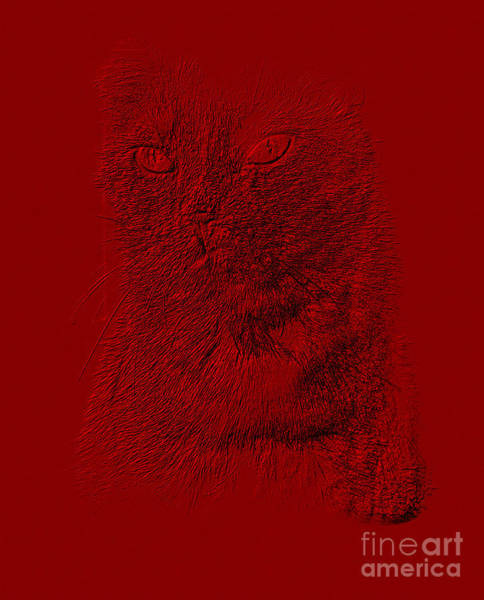Hello Kitty Wall Art - Photograph - Red Cat Collection. Special... by Oksana Semenchenko