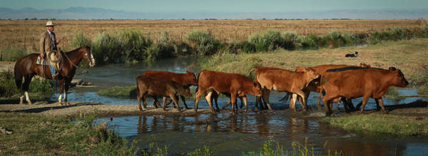 Photograph - Red Cattle by Diane Bohna