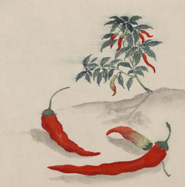 Wall Art - Digital Art - Red Chilli by Aged Pixel