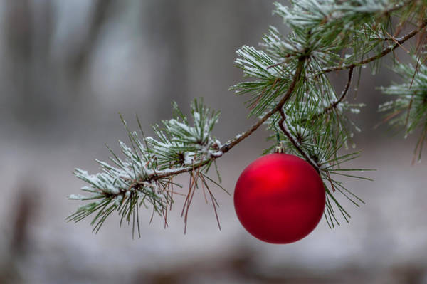 Photograph - Red Christmas Ball Branch by Terry DeLuco