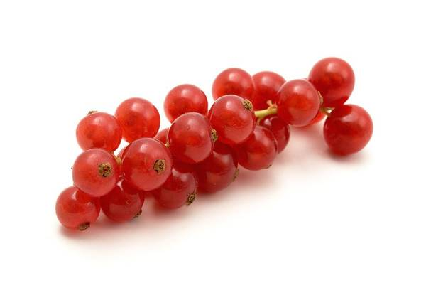 Currants Photograph - Red Currant by Fabrizio Troiani