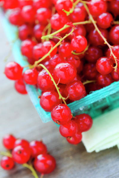 Currants Photograph - Red Currants by Nicolesy