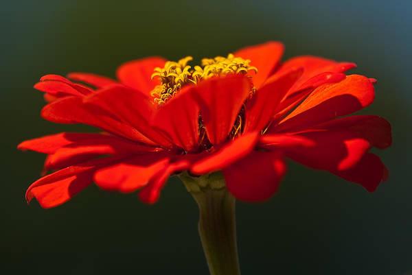 Photograph - A Bee's Eye View by  Onyonet  Photo Studios