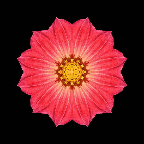 Photograph - Red Dahlia Hybrid I Flower Mandala by David J Bookbinder