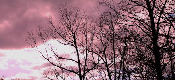 Photograph - Red Dawn by Candice Trimble