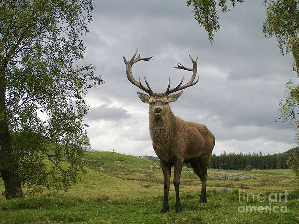 Photograph - Red Deer Stag - Monarch Of The Glen by Phil Banks
