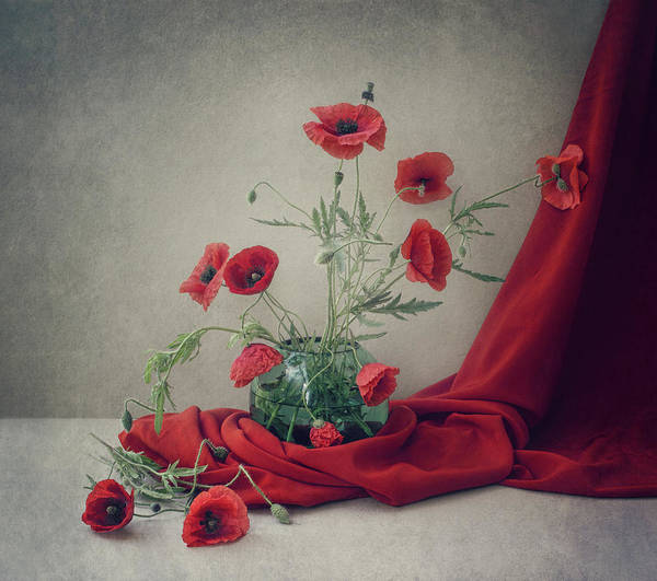 Red Poppies Wall Art - Photograph - Red by Dimitar Lazarov -