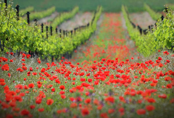 Red Flower Photograph - Red District by Ales Komovec