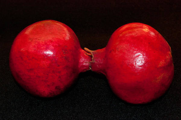 Photograph - Red Dumbbell by Tikvah's Hope