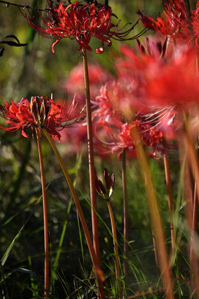 Hurricane Lily Photograph - Red Ending by Joe Bledsoe