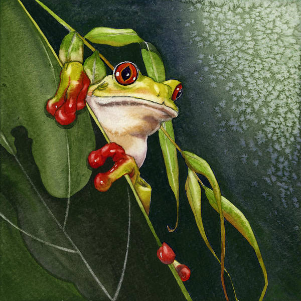 Painting - Red-eyed Frog by Lyse Anthony