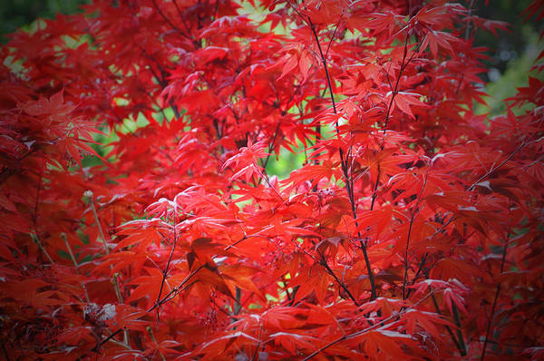 Photograph - Red  by Lynn Bauer