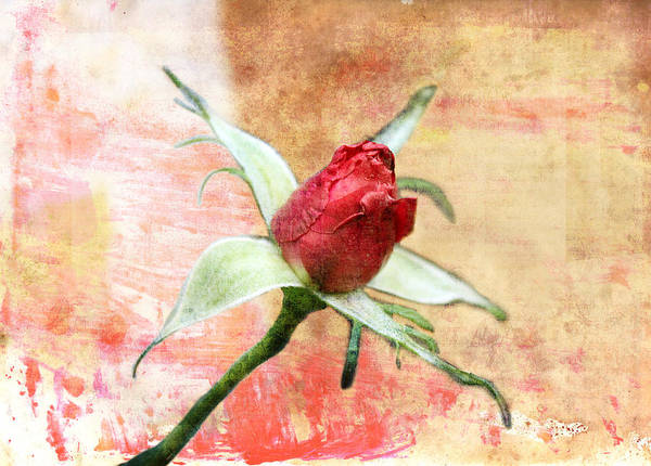 Digital Art - Red Flower 1 by Helene U Taylor