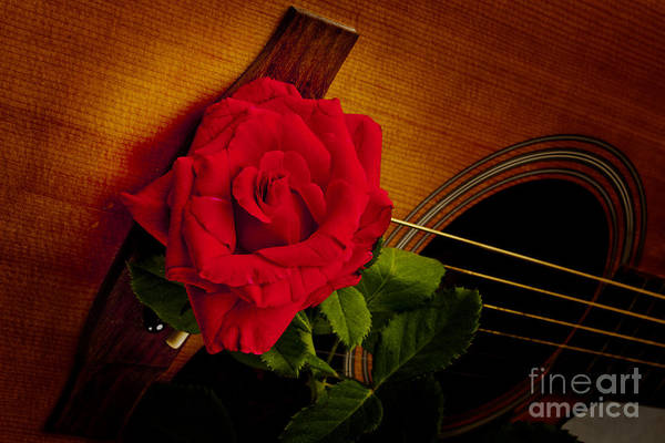 Photograph - Red Flower Rose Bloom On Guitar In Color 3263.02 by M K Miller