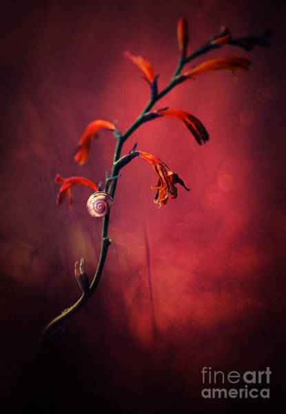 Wall Art - Photograph - Red Flowers by Jaroslaw Blaminsky