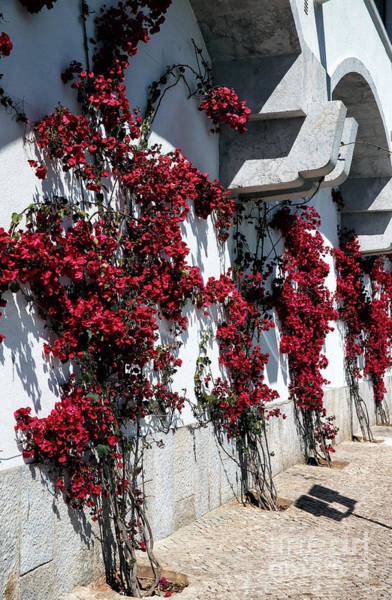 Photograph - Red Flowers On The Wall by John Rizzuto