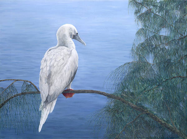 Boobies Painting - Red-footed Booby by Dorothea Hyde