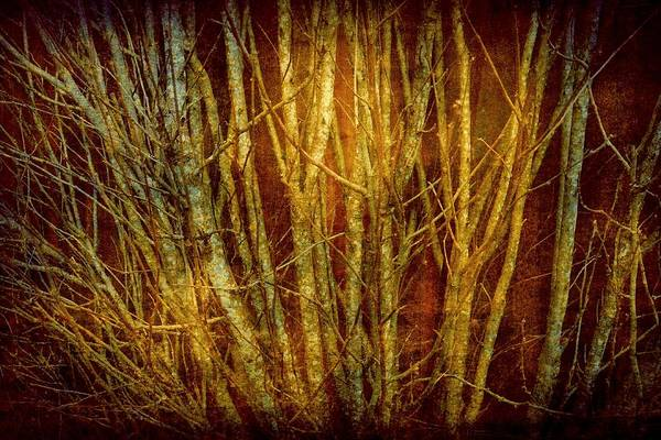 Photograph - Red Forest by Patricia Strand