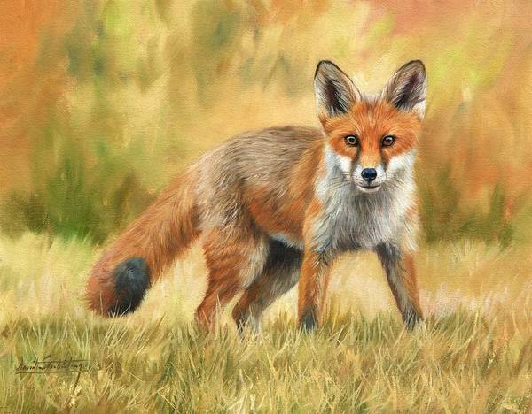 Canine Painting - Red Fox by David Stribbling