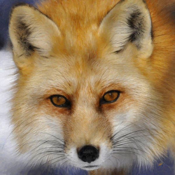 Painting - Red Fox by Dean Wittle