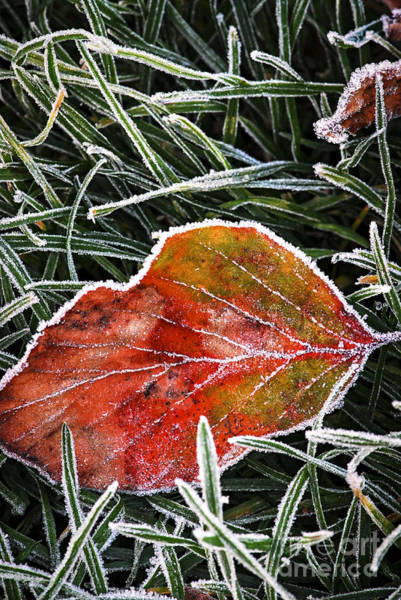 Icy Leaves Wall Art - Photograph - Red Frosty Leaf On Frozen Ground by Elena Elisseeva