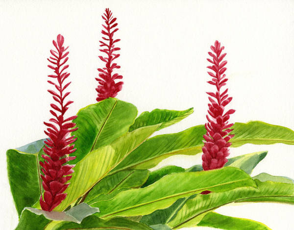 Wall Art - Painting - Red Ginger Flowers by Sharon Freeman