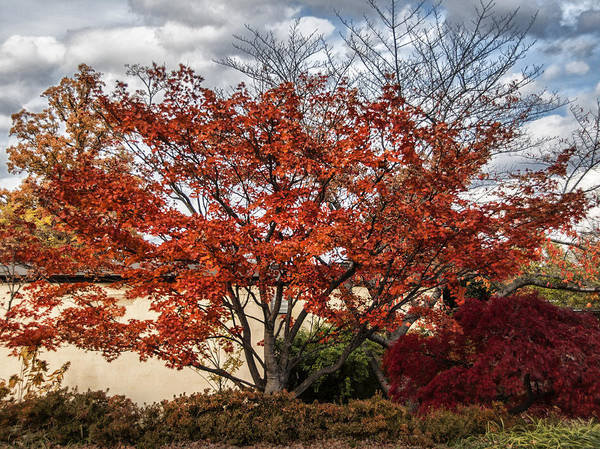 Photograph - Red Glory by Terry Rowe