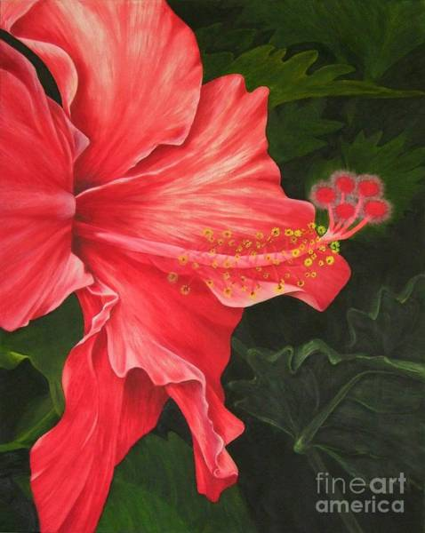Hibiscus Flower Painting - Red Hibiscus by Mary Deal
