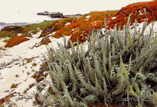 Ice Plant Digital Art - Red Ice On Beach 3 by Linda  Parker