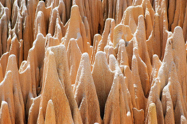 Madagascar Photograph - Red Karst Limestone Pinnacles by Dr P. Marazzi