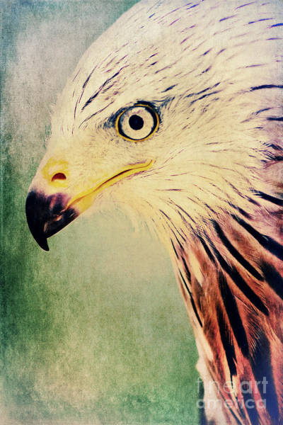 Kite Photograph - Red Kite Art by Angela Doelling AD DESIGN Photo and PhotoArt