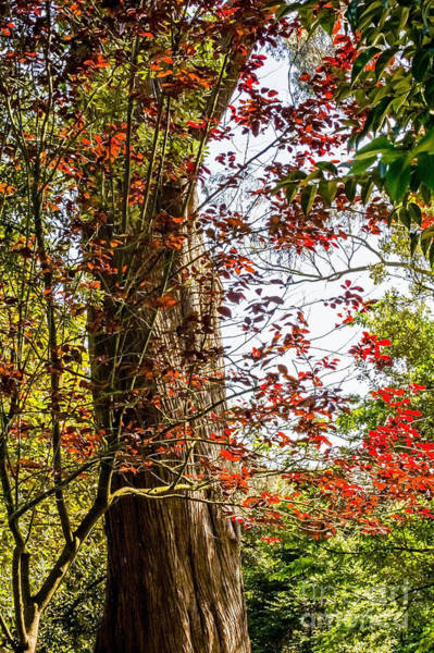Photograph - Red Leaves by Kate Brown