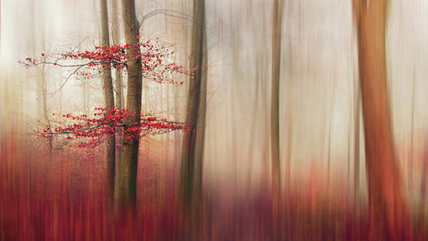 Red Leaves Wall Art - Photograph - Red Leaves. by Leif L?ndal